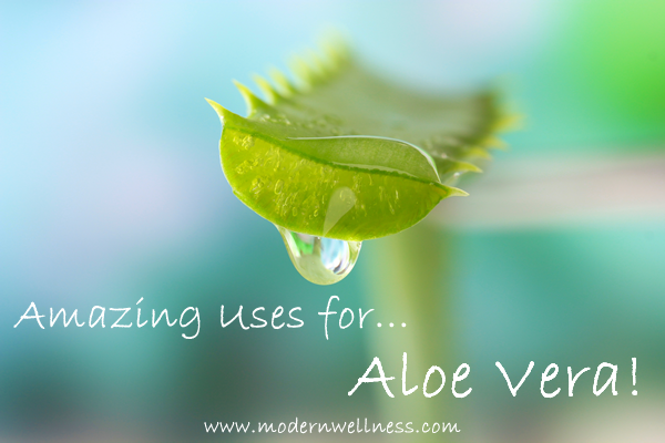 Amazing Uses for Aloe Vera